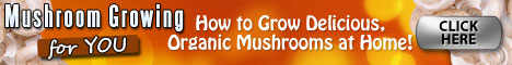 How To Grow Mushrooms Minecraft 1.2.5 : Medicinal Mushrooms' Active Antioxidant And Anti-cancer Rewards