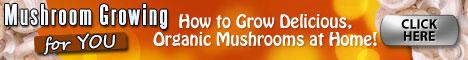 How To Grow Mushrooms Minecraft 1.2.5 : Medicinal Mushrooms' Active Antioxidant And Anti-cancer Rewards